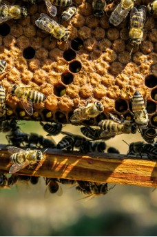 Persistent Contaminants Found in Purified Beeswax